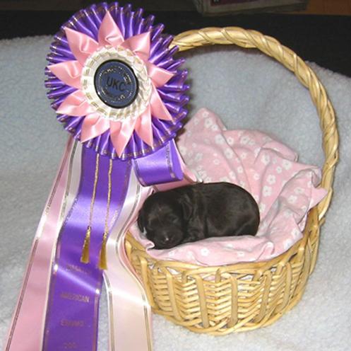 minnie-x-ben-puppy-in-basket-with-bis-ribbon.jpg