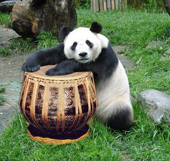 panda011.jpg