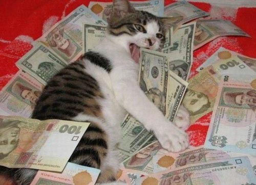 cat-money