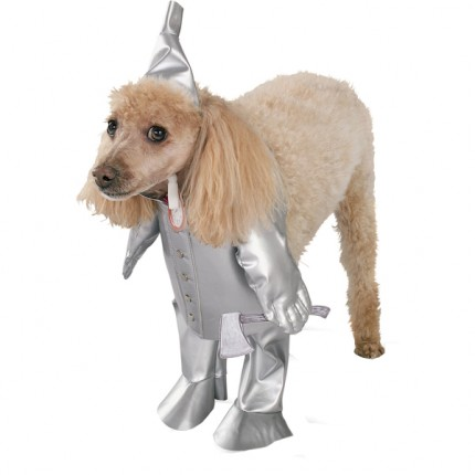 tin_man_dog