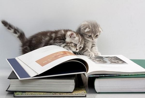 kittensreading